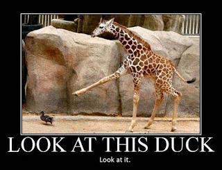 Girafa - lindo animal engraçado 01