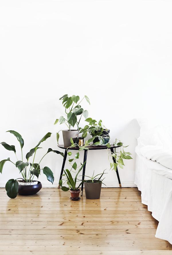 Las 5 mejores ideas para tener plantas en casa la for Plantas de interior para colgar