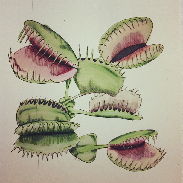 124 Venus Fly Trap Biology Notes For A Level
