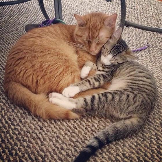 Chazz dan Samus saling menyayangi