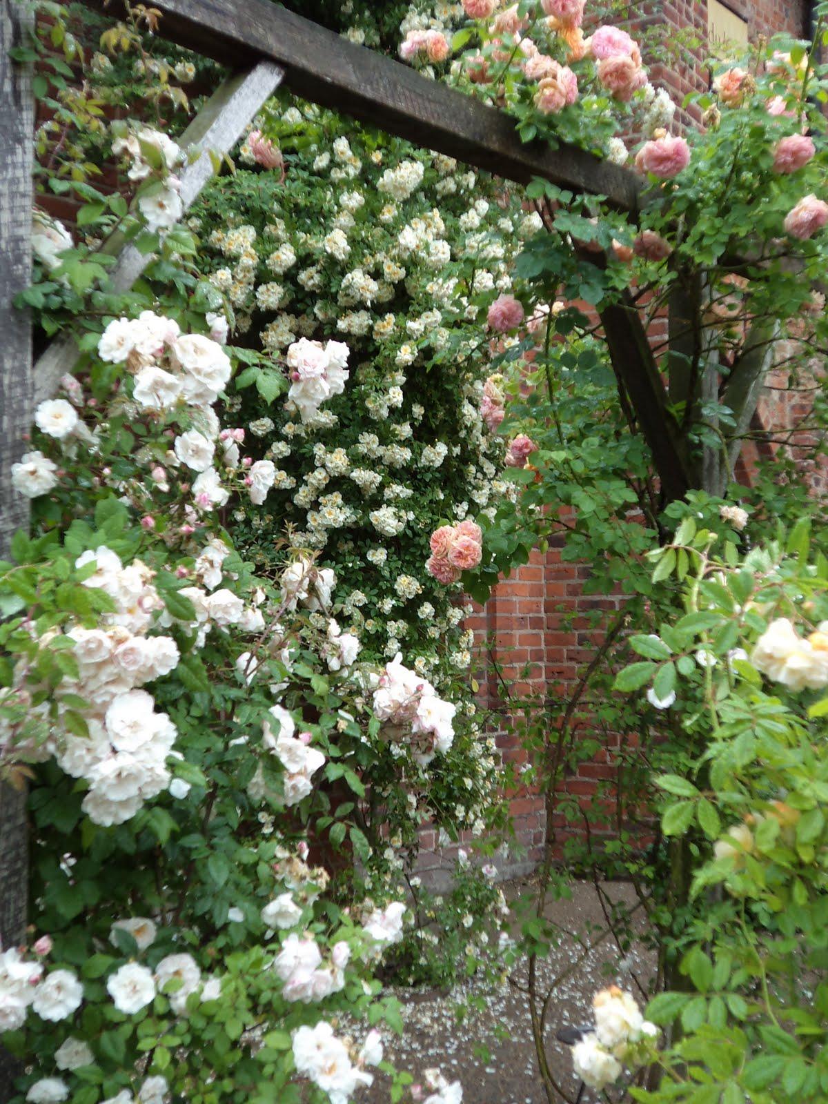 Rosenälvorna: en rosenälskares paradis