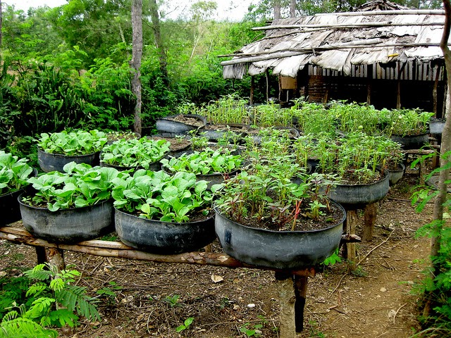 Vegans living off the land recycled car truck tire gardens - Garden ideas using tyres ...
