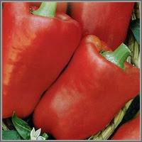 Сладкий перец сорт «Доверчивый»