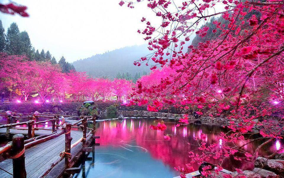 زهر الكرز باليابان مع أجمل صور طبيعة خلابة - فاشون | مجلة ...