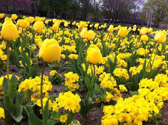 Victoria+Park+London+Tower+Hamlets+flowers