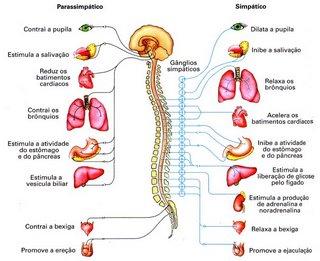 ejaculação precoce,disfunção eretil,impotência sexual,causas da ejaculação precoce,sintomas da ejaculação precoce,causas da disfunção erétil,sintomas da disfunção erétil
