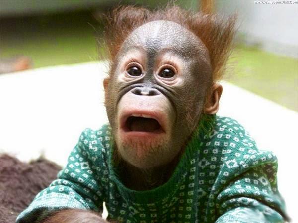 Saat monyet kecewa diputusin pacar