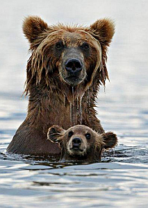 Imagenes Graciosas de Animales, Osos