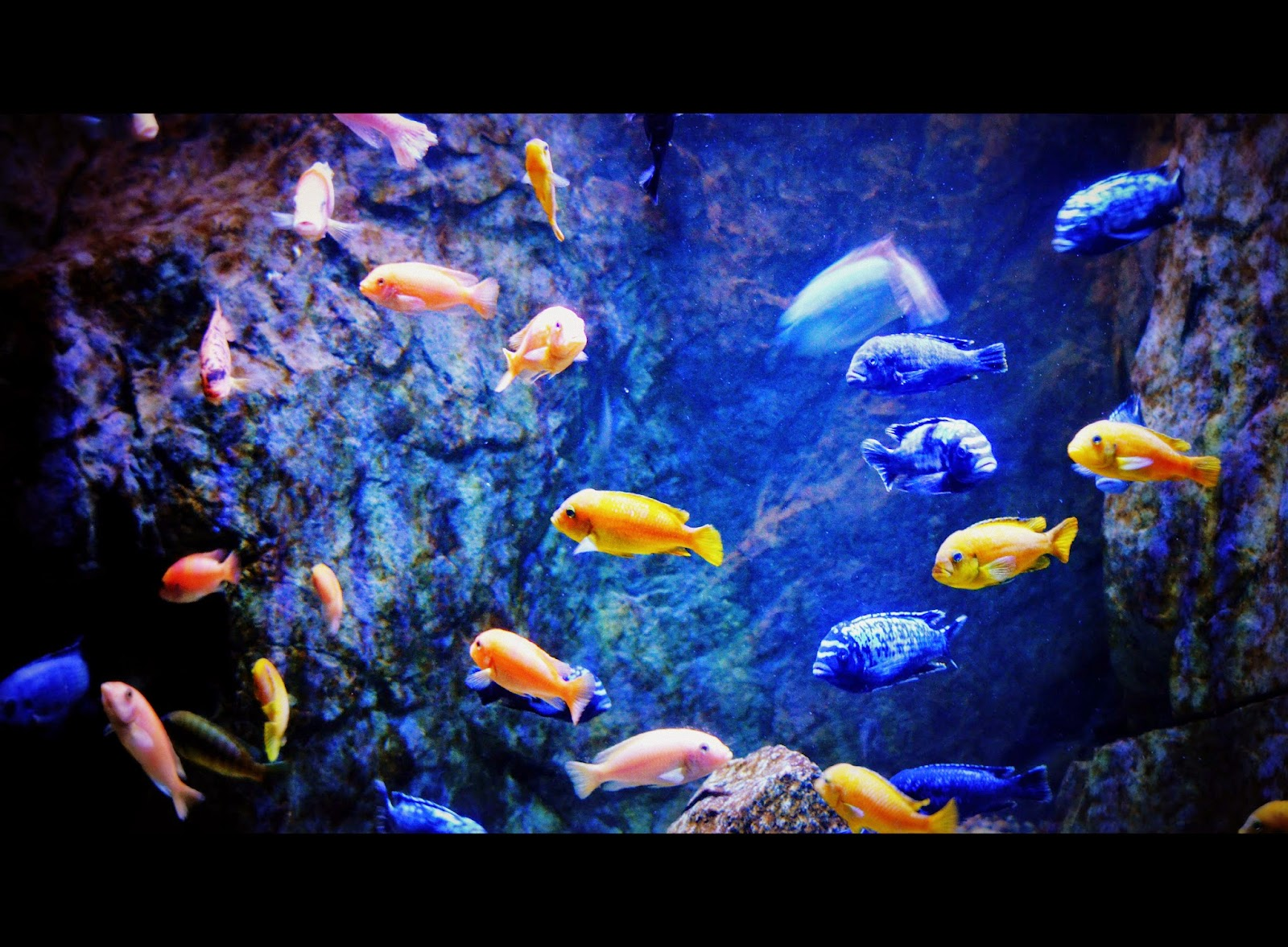 CT aquarium fishes