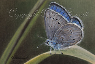 Silvery Blue Butterfly Painting in pastel by Colette Theriault