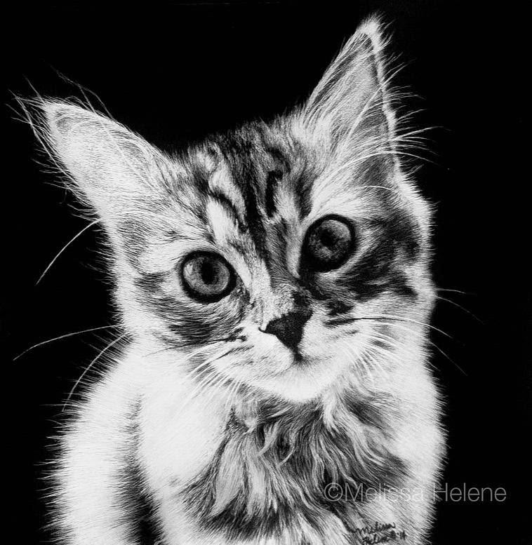 02-Kitten-Melissa-Helene-Amazing-Expressions-in-Scratchboard-Animal-Portraits-www-designstack-co