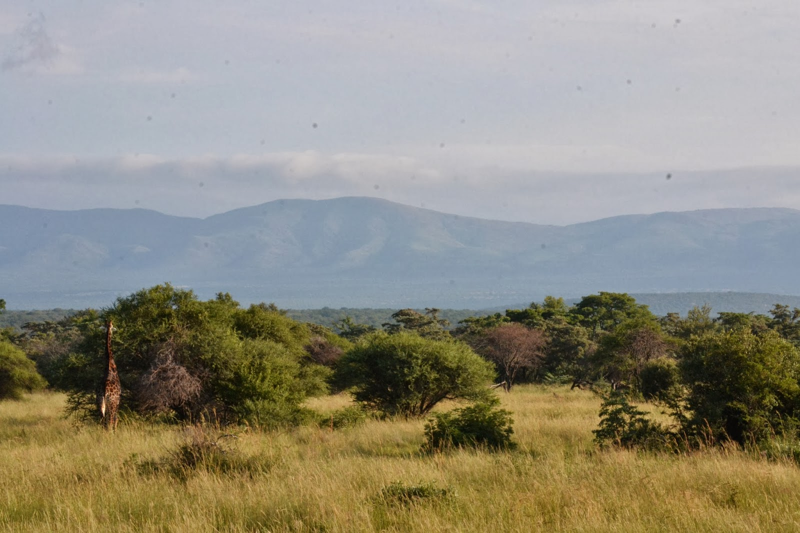 Giraffe at base of mountain