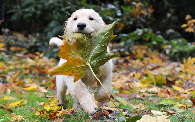 Autumn Animal Images4