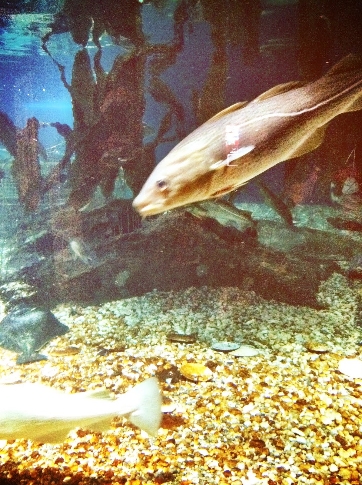 Day Trip The Maritime Aquarium In Norwalk Ct You 39 Re