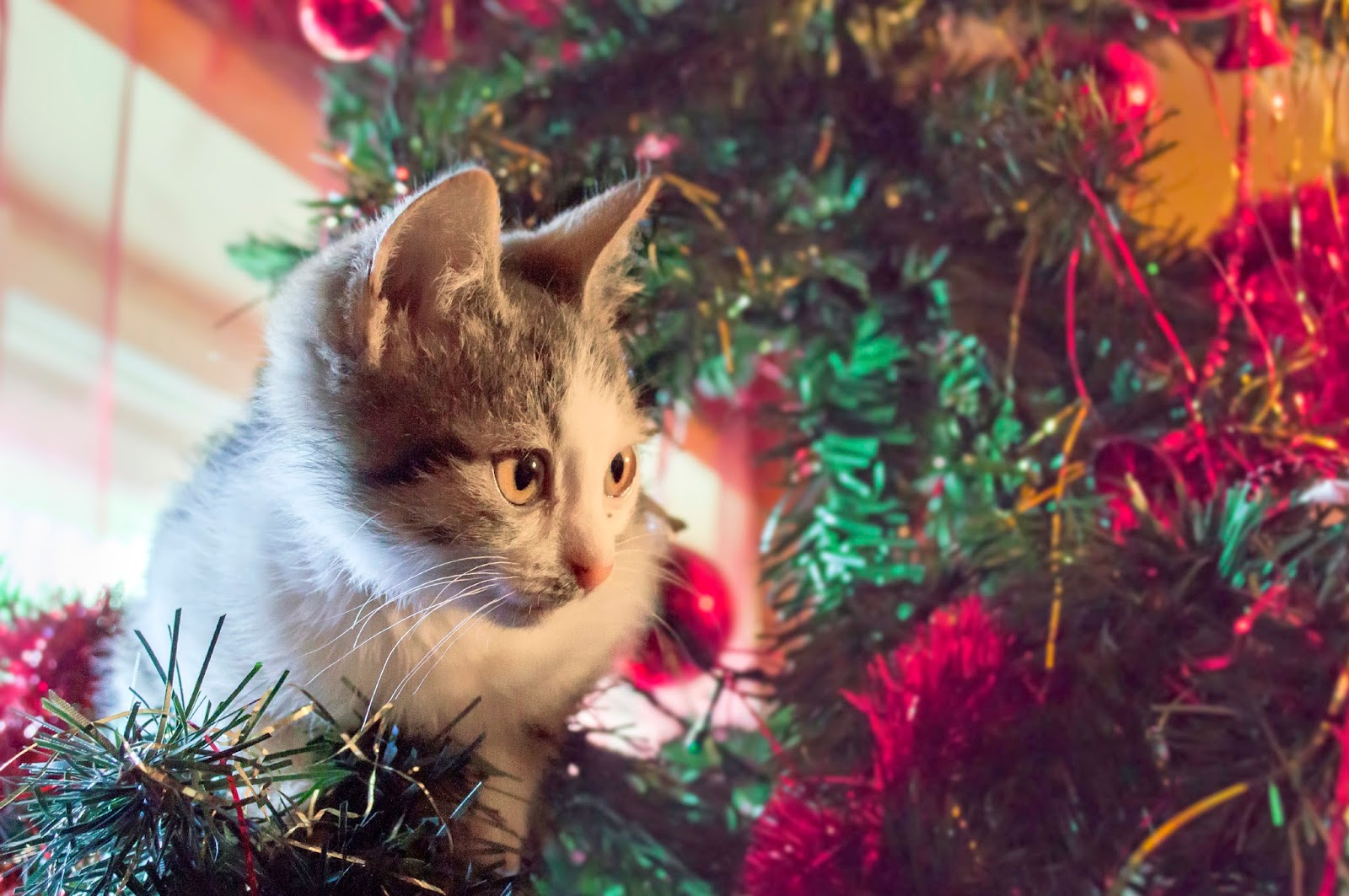 Citrus To Keep Cats Away From Christmas Tree