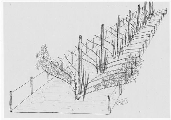 Les secrets de la taille et de la greffe des arbres fruitiers bio comment r ussir la culture - Taille des framboisiers non remontants ...