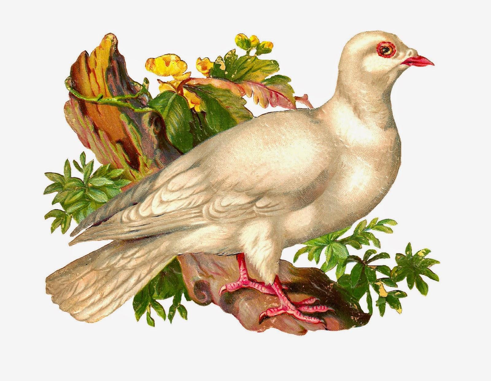 http://1.bp.blogspot.com/-4FWTmPI5Ppk/U5ULIlWRVpI/AAAAAAAAUTM/_ebqXfl5aWE/s1600/wht_pigeon_scrap.jpg