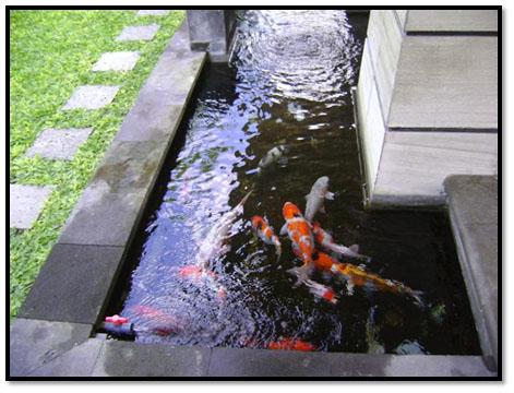 ada beberapa tips menentukan letak pembuatan kolam ikan yang tepat