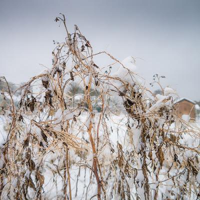 Snow on the allotment 2013, #1 © Graham Dew