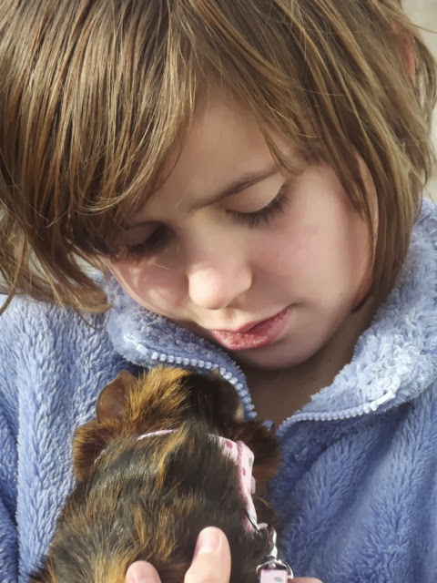 post walk cuddle with guinea pig