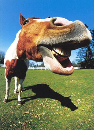 Funny-horse-face