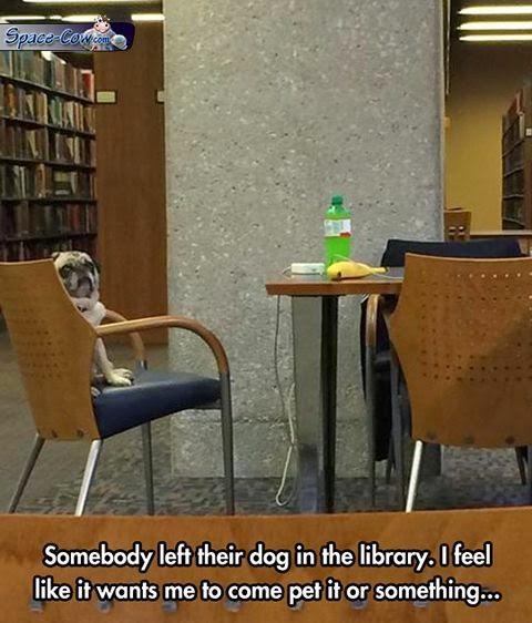 funny cute pug picture