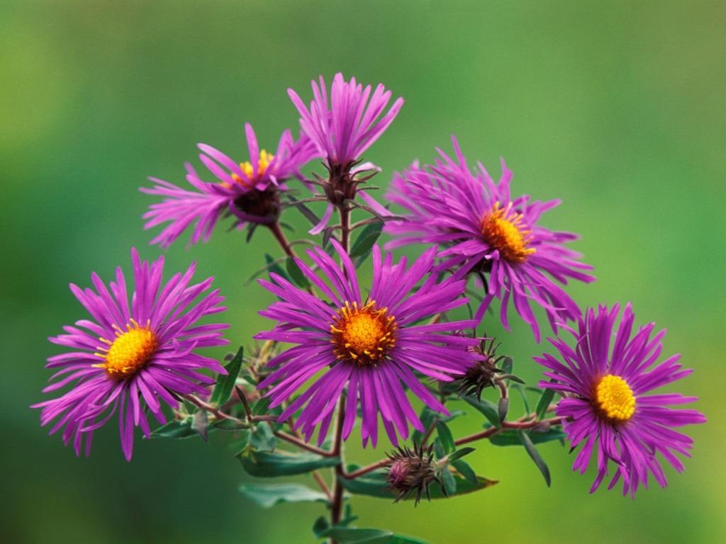 Procvjetalo proljetno cvijeće - download besplatna pozadina za desktop priroda