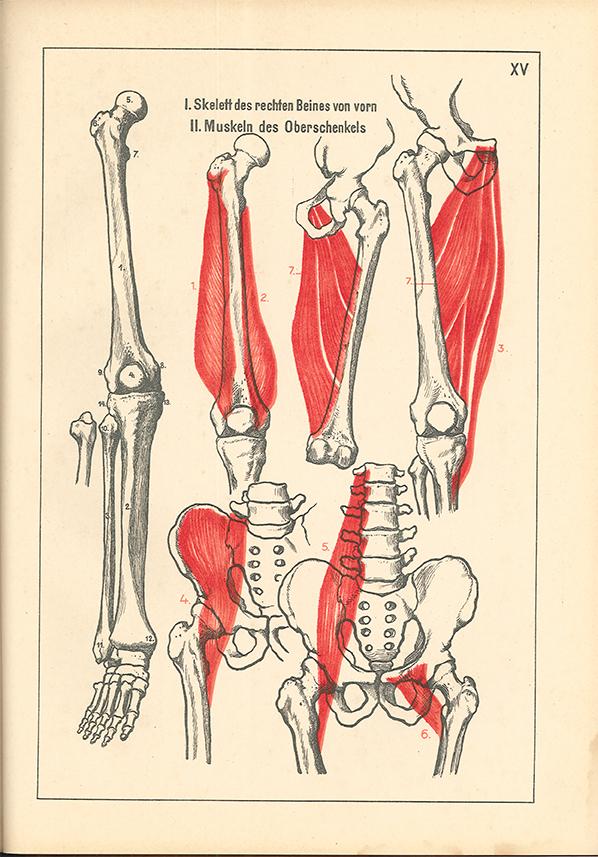 Berühmt Eliot Goldfinger Menschliche Anatomie Für Künstler Fotos ...