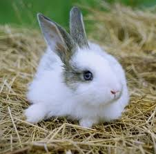 Rabbits pictures