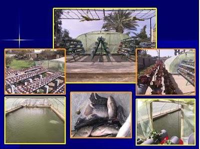 تربية السمك الاسطح
