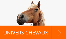 Univers Chevaux