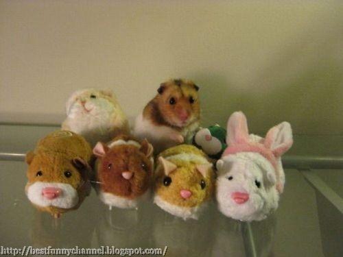 Funny hamster.