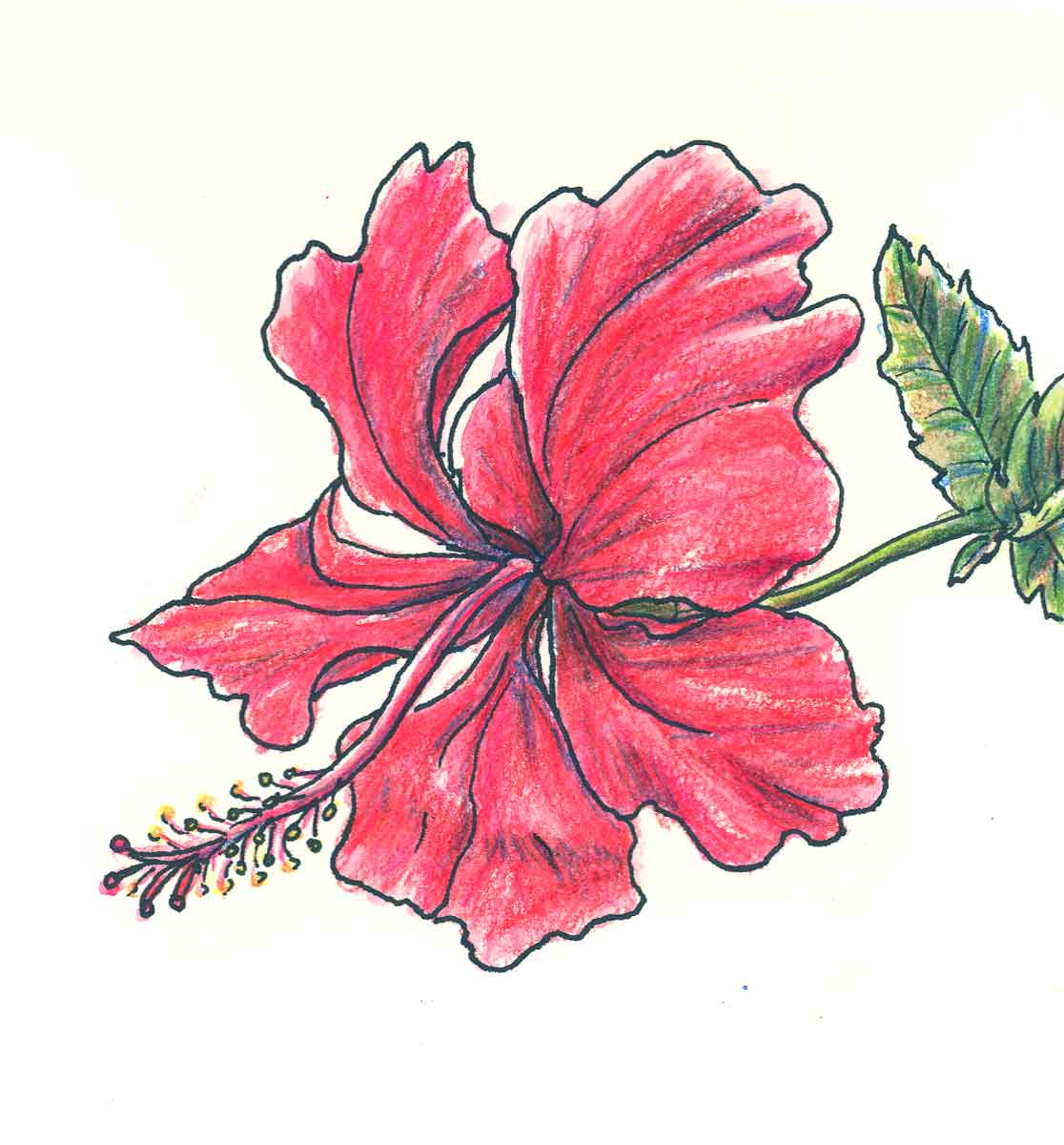 Drawings of flowers izmirmasajfo