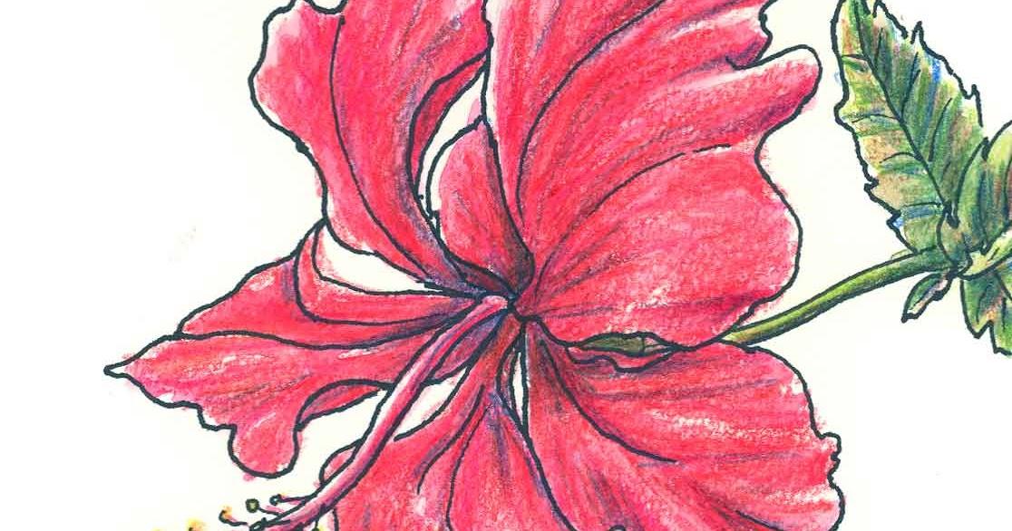 drawings of flowers. Black Bedroom Furniture Sets. Home Design Ideas