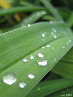 green drops, sydney