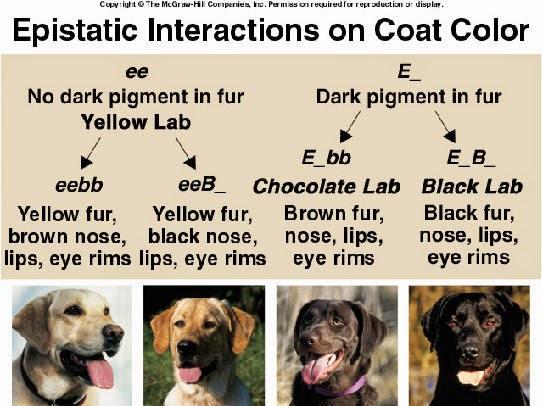 Dog Human Interactions