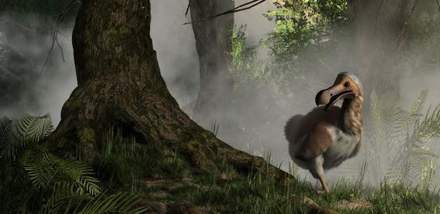 Dodo, extincion y biologia
