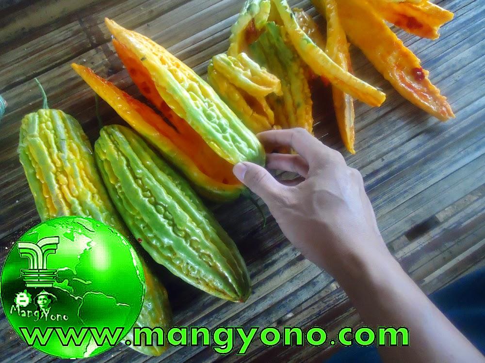 Cara mencegah jerawat dan menghaluskan kulit dengan buah pare