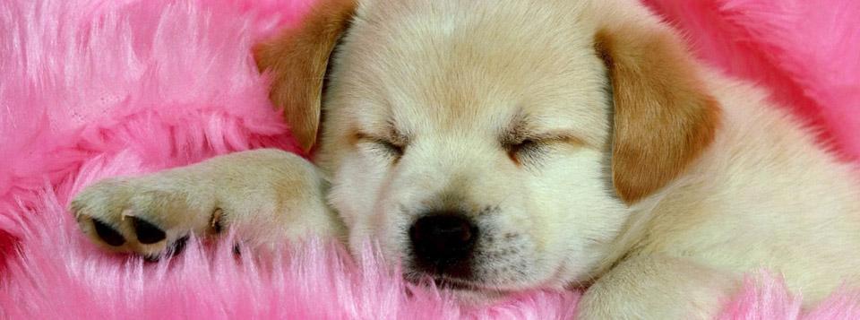 Çiçek koklayan köpek yavrusu kapak fotoğrafi ve resimleri