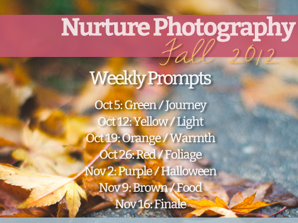 Nurture Your Photography