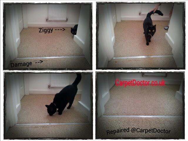 Carpet & Rug Repair Pet Damage.