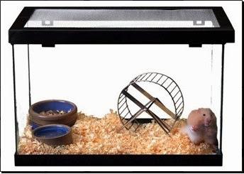 Aprenda como cuidar do seu Hamster