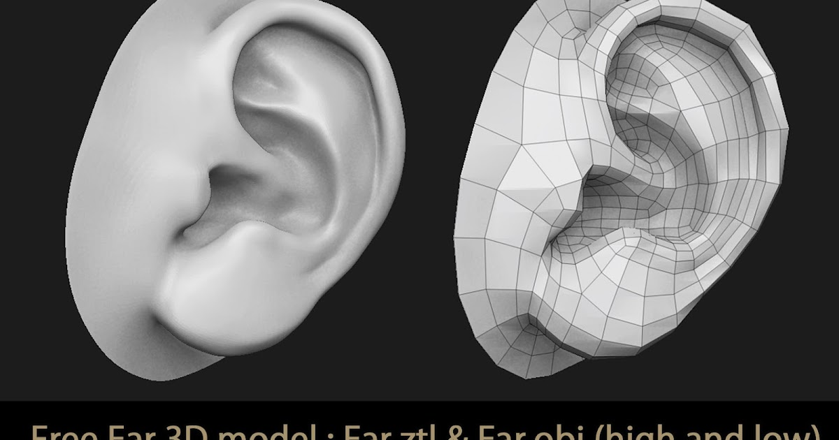 Shop for Ear Anatomy Models and Charts