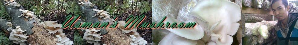 jamur Tiram organik