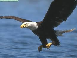 Que significa soñar con Aguilas