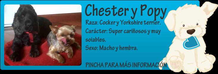 http://mirada-animal-toledo.blogspot.com.es/2014/06/chester-y-popy-adopcion-conjunta-para.html