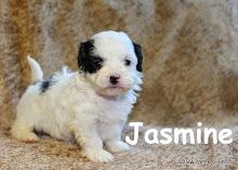Jasmine - black and white