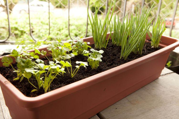Crie Jardim Como fazer uma horta no jardim