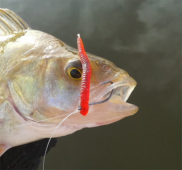 Fooling fish drop shot lures for Fin s fish
