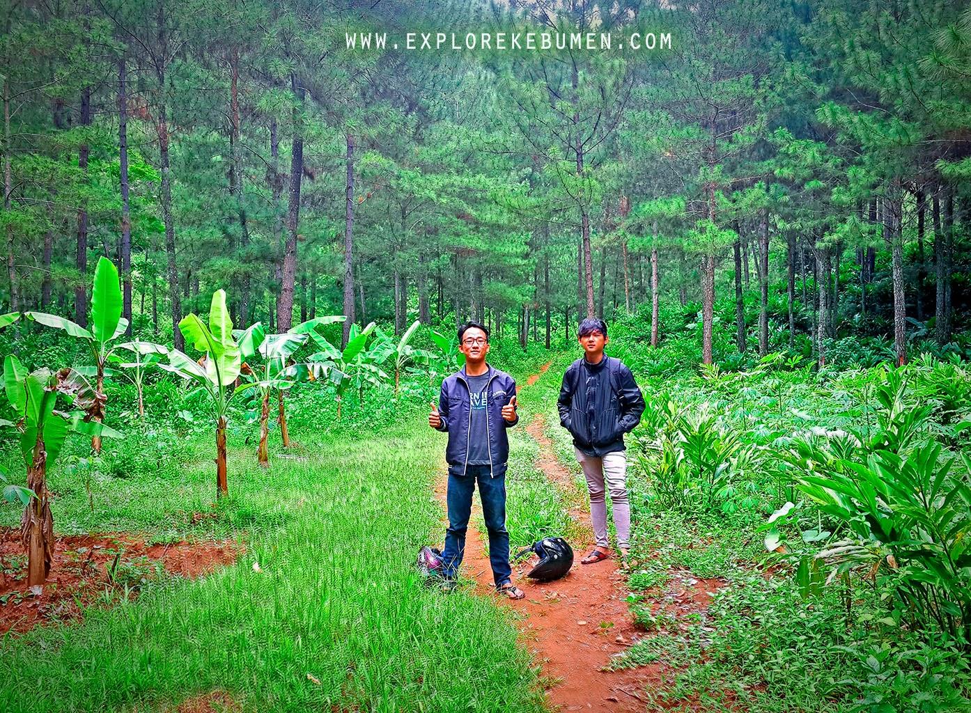 Hutan Pinus Sempor Kebumen
